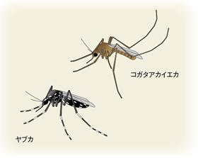 日本脳炎の謎|日本脳炎 ...