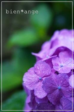 stara0027_001136-20120611aroma.jpgのサムネール画像のサムネール画像